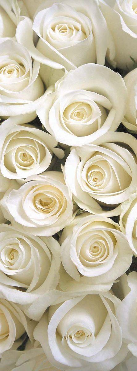 Фотообои Milan Белые розы, 100 х 270 смRG-D31SФотообои Milan Белые розы позволят создать неповторимый облик помещения, в котором они размещены. Фотообои наносятся на стены тем же способом, что и обычные обои. Благодаря превосходной печати и высококачественной флизелиновой основе такие обои будут радовать вас долгое время. Фотообои снова вошли в нашу жизнь, став модным направлением декорирования интерьера. Выбрав правильную фактуру и сюжет изображения можно добиться невероятного эффекта живого присутствия.