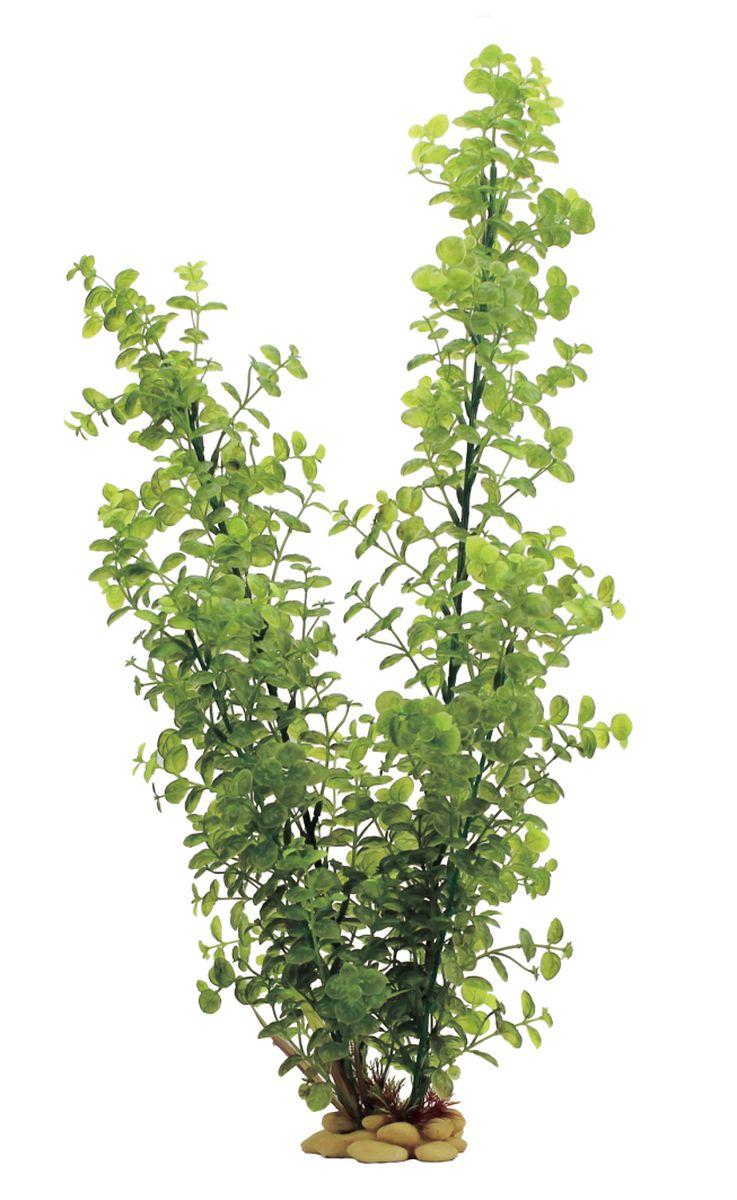 Растение для аквариума ArtUniq Бакопа, высота 60 см0120710Композиция из искусственных растений ArtUniq превосходно украсит и оживит аквариум.Растения - это важная часть любой композиции, они помогут вдохнуть жизнь в ландшафт любого аквариума или террариума. А их сходствос природными порадует даже самых взыскательных ценителей.