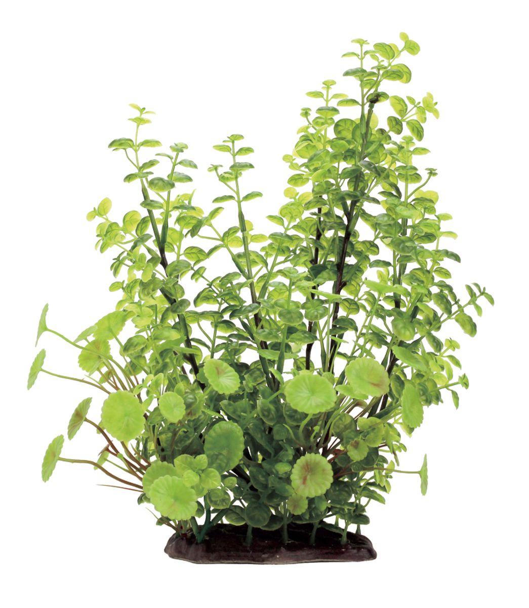 Растение для аквариума ArtUniq Кардамин, высота 35 смART-1130104Композиция из искусственных растений ArtUniq превосходно украсит и оживит аквариум.Растения - это важная часть любой композиции, они помогут вдохнуть жизнь в ландшафт любого аквариума или террариума. А их сходствос природными порадует даже самых взыскательных ценителей.