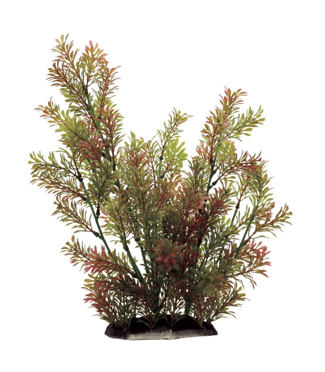 Растение для аквариума ArtUniq Ротала индийская, высота 35 см0120710Композиция из искусственных растений ArtUniq превосходно украсит и оживит аквариум.Растения - это важная часть любой композиции, они помогут вдохнуть жизнь в ландшафт любого аквариума или террариума. А их сходствос природными порадует даже самых взыскательных ценителей.