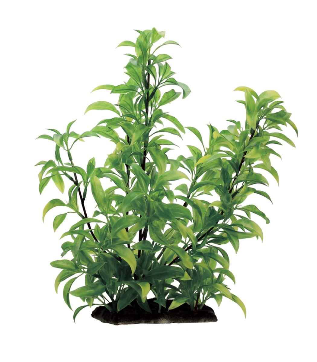 Растение для аквариума ArtUniq Стаурогин, высота 35 см0120710Композиция из искусственных растений ArtUniq превосходно украсит и оживит аквариум.Растения - это важная часть любой композиции, они помогут вдохнуть жизнь в ландшафт любого аквариума или террариума. А их сходствос природными порадует даже самых взыскательных ценителей.