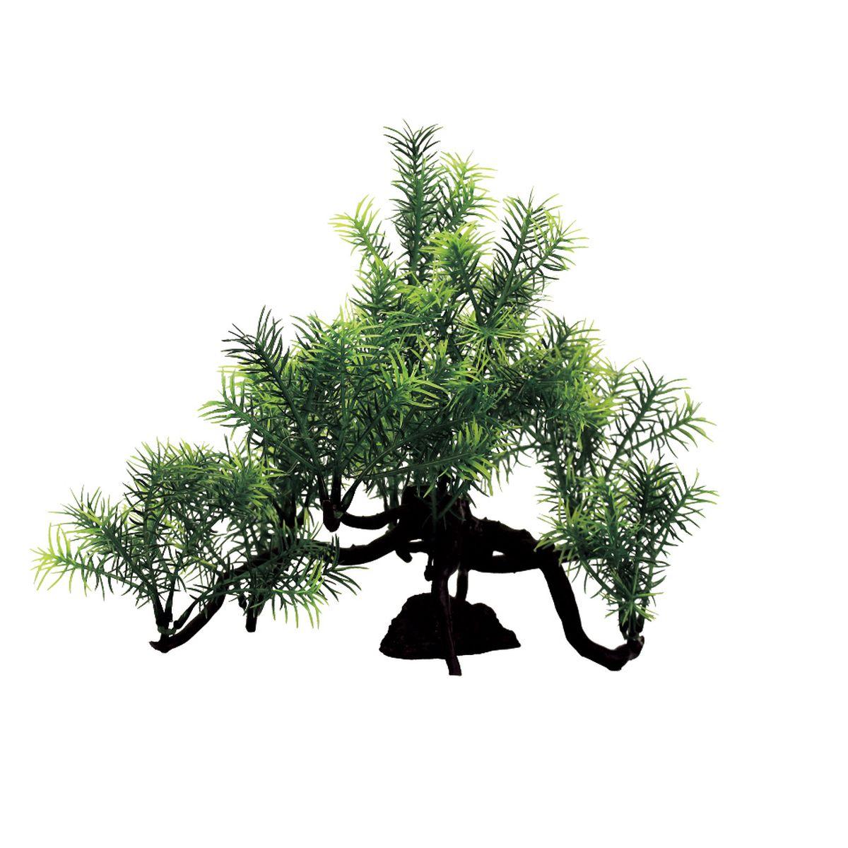 Композиция из растений для аквариума ArtUniq Погостемон Эректус, 35 x 18 x 23 см0120710Композиция из искусственных растений ArtUniq превосходно украсит и оживит аквариум.Растения - это важная часть любой композиции, они помогут вдохнуть жизнь в ландшафт любого аквариума или террариума. Лучше всего это сделают яркие и сочные цвета искусственных растений серии ArtPlants. Композиция является точной копией природного растения.