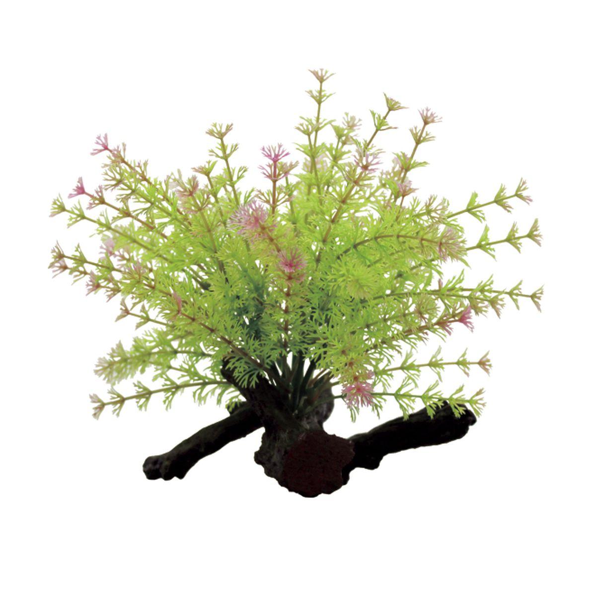 Композиция из растений для аквариума ArtUniq Лимнофила на коряге, 17 x 13 x 17 см декорация для аквариума artuniq пористый камень 20 5 x 10 5 x 18 8 см