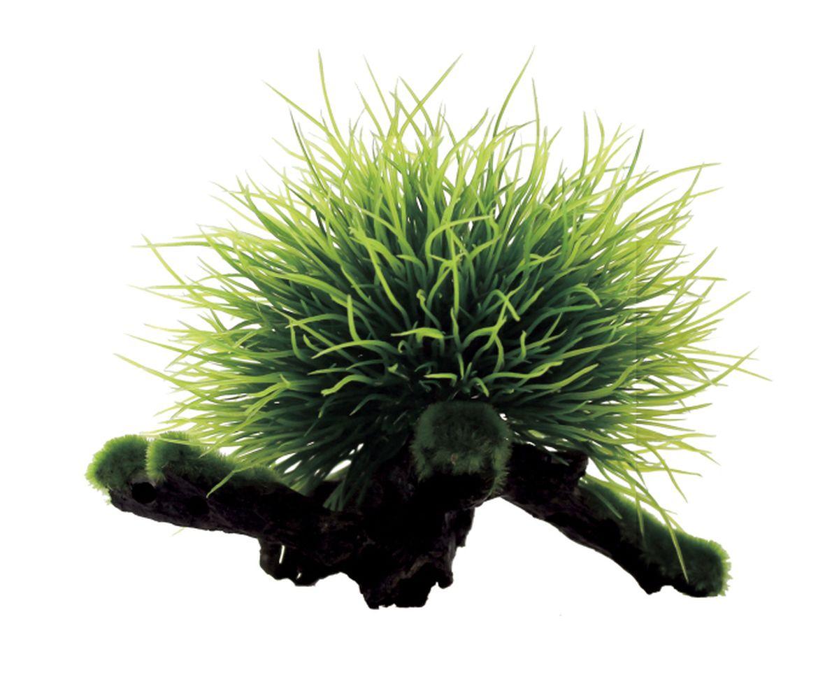 Композиция из растений для аквариума ArtUniq Пузырчатка на коряге, 15 x 12 x 12 см0120710Композиция из искусственных растений ArtUniq превосходно украсит и оживит аквариум.Растения - это важная часть любой композиции, они помогут вдохнуть жизнь в ландшафт любого аквариума или террариума. Композиция является точной копией природного растения.