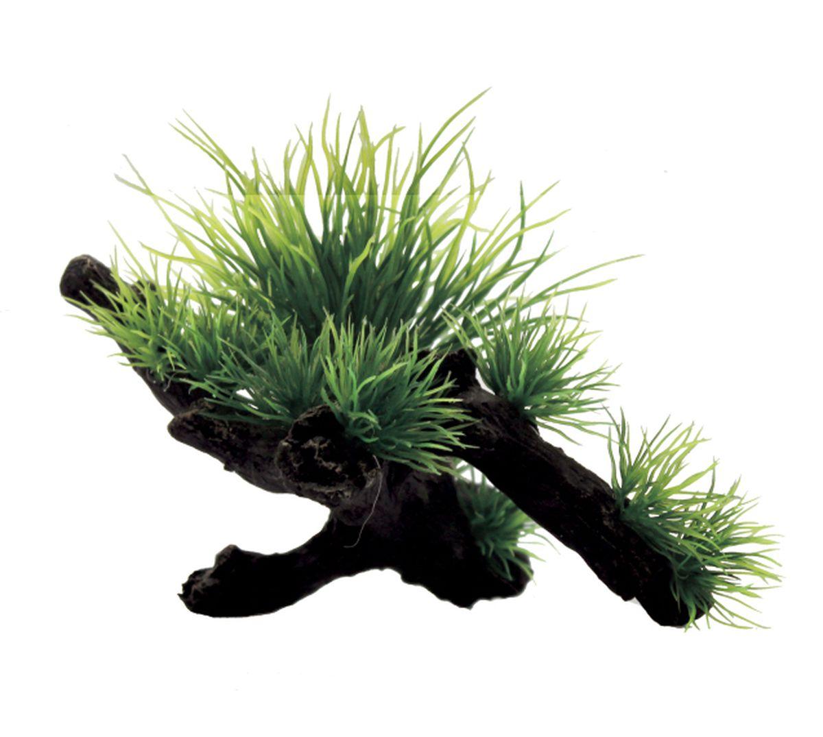 Композиция из растений для аквариума ArtUniq Ситняг на коряге, 15 x 10 x 11 см0120710Композиция из растений для аквариума ArtUniq Ситняг на коряге, 15 x 10 x 11 см