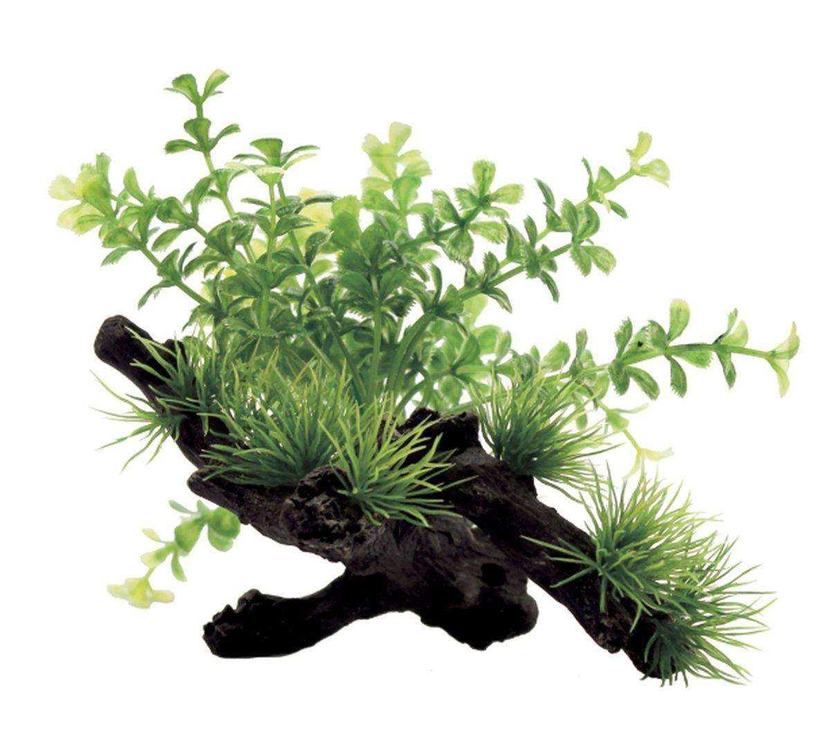 Композиция из растений для аквариума ArtUniq Микрантемум на коряге, 15 x 12 x 12 см0120710Композиция из искусственных растений ArtUniq превосходно украсит и оживит аквариум.Растения - это важная часть любой композиции, они помогут вдохнуть жизнь в ландшафт любого аквариума или террариума. Композиция является точной копией природного растения.