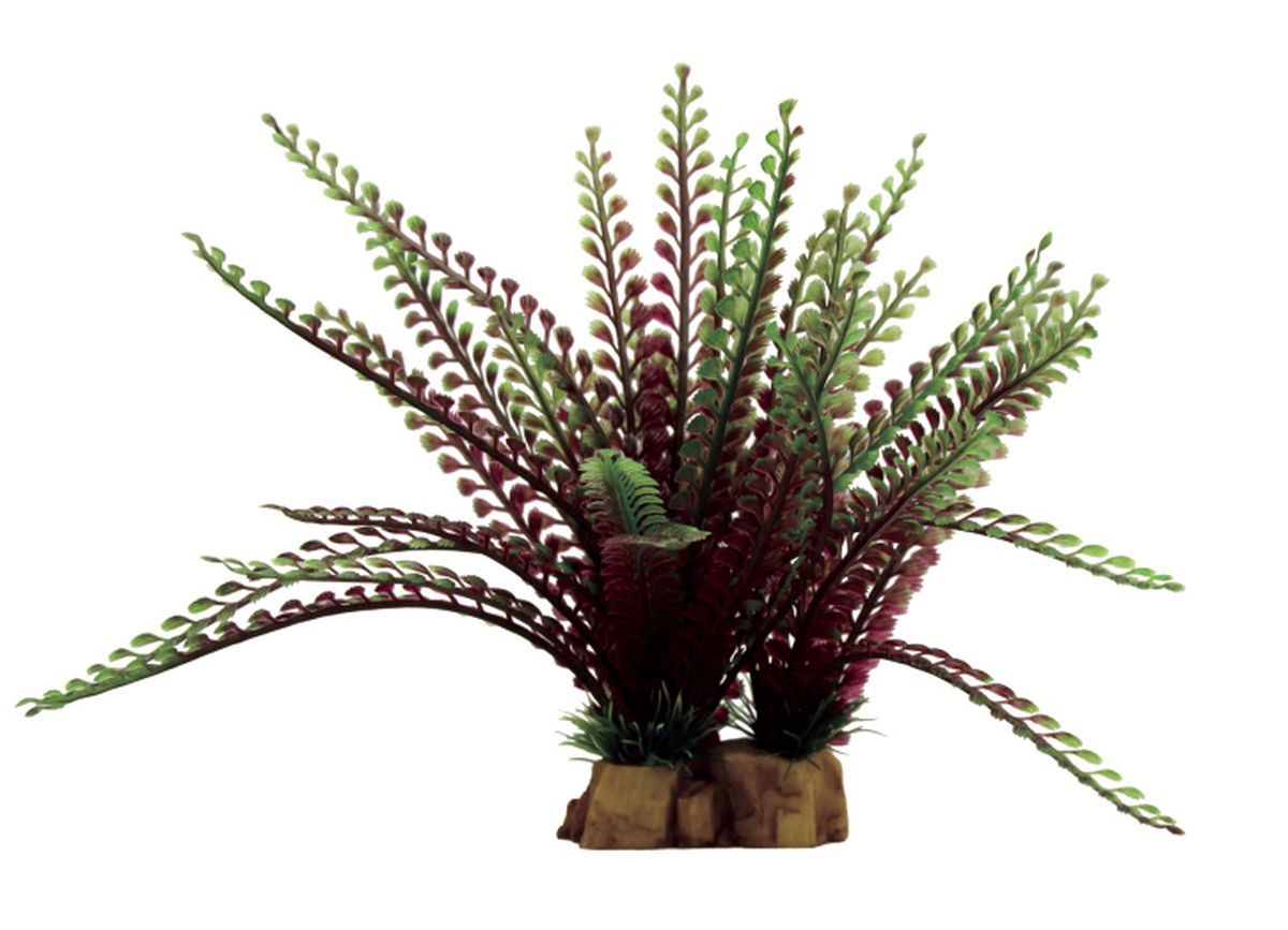 Растение для аквариума ArtUniq Гигрофила перистонадрезанная, 16 x 13 x 22 см0120710Композиция из искусственных растений ArtUniq превосходно украсит и оживит аквариум.Растения - это важная часть любой композиции, они помогут вдохнуть жизнь в ландшафт любого аквариума или террариума. А их сходствос природными порадует даже самых взыскательных ценителей.