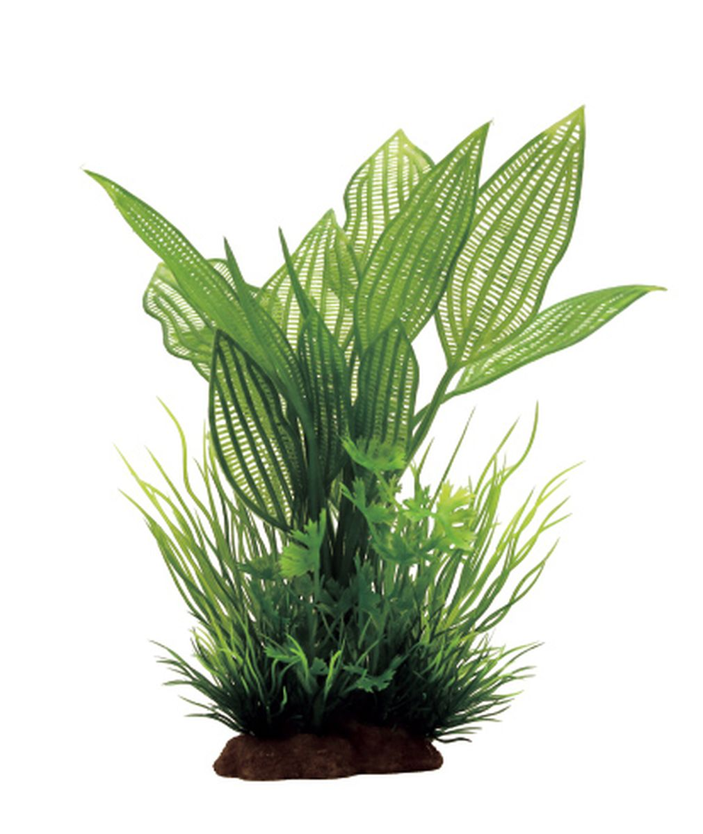 Композиция из растений для аквариума ArtUniq Апоногетон мадагаскарский, 12 x 10 x 20 см0120710Композиция из искусственных растений ArtUniq превосходно украсит и оживит аквариум.Растения - это важная часть любой композиции, они помогут вдохнуть жизнь в ландшафт любого аквариума или террариума.Композиция является точной копией природного растения.