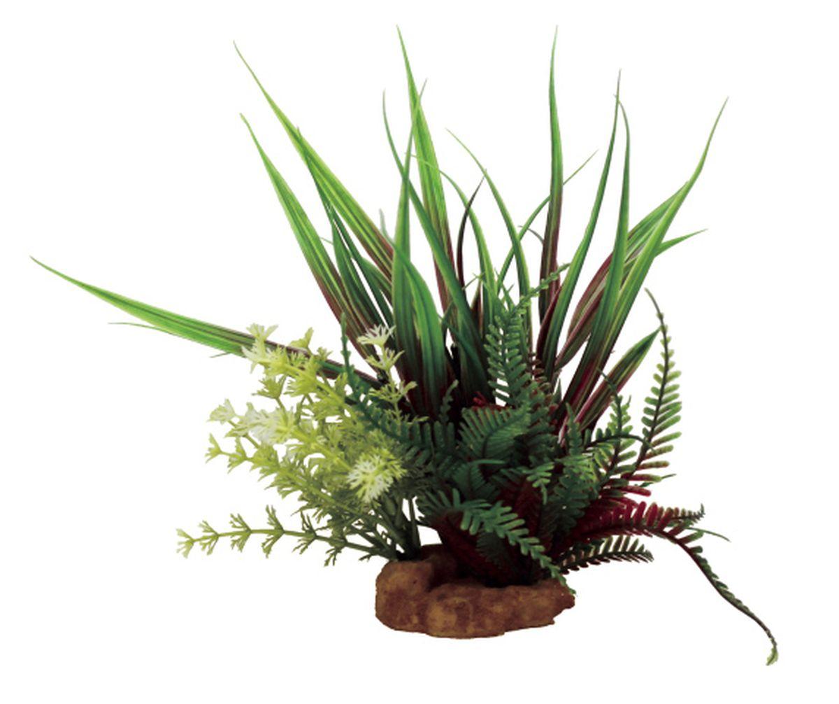 Композиция из растений для аквариума ArtUniq Акорус красно-зеленый, 15 x 13 x 24 см0120710Композиция из искусственных растений ArtUniq превосходно украсит и оживит аквариум.Растения - это важная часть любой композиции, они помогут вдохнуть жизнь в ландшафт любого аквариума или террариума.Композиция является точной копией природного растения.