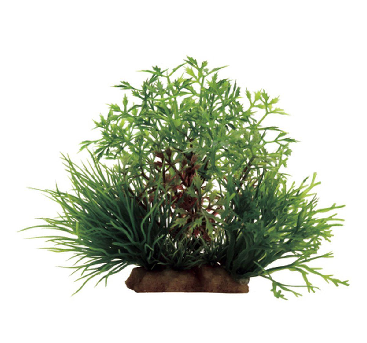 Композиция из растений для аквариума ArtUniq Перистолистник, 16 x 12 x 10 см0120710Композиция из искусственных растений ArtUniq превосходно украсит и оживит аквариум.Растения - это важная часть любой композиции, они помогут вдохнуть жизнь в ландшафт любого аквариума или террариума. Композиция является точной копией природного растения.