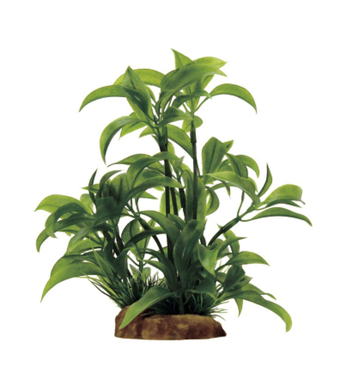 Растение для аквариума ArtUniq Альтернантера бетзикиана, 8 x 7 x 14 смART-1130909Композиция из искусственных растений ArtUniq превосходно украсит и оживит аквариум.Растения - это важная часть любой композиции, они помогут вдохнуть жизнь в ландшафт любого аквариума или террариума. А их сходствос природными порадует даже самых взыскательных ценителей.