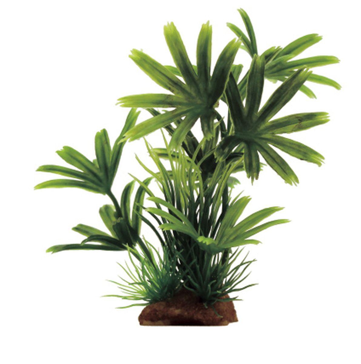 Композиция из растений для аквариума ArtUniq Пальма зеленая, 13 x 5 x 15 см0120710Композиция из искусственных растений ArtUniq превосходно украсит и оживит аквариум.Растения - это важная часть любой композиции, они помогут вдохнуть жизнь в ландшафт любого аквариума или террариума. Композиция является точной копией природного растения.
