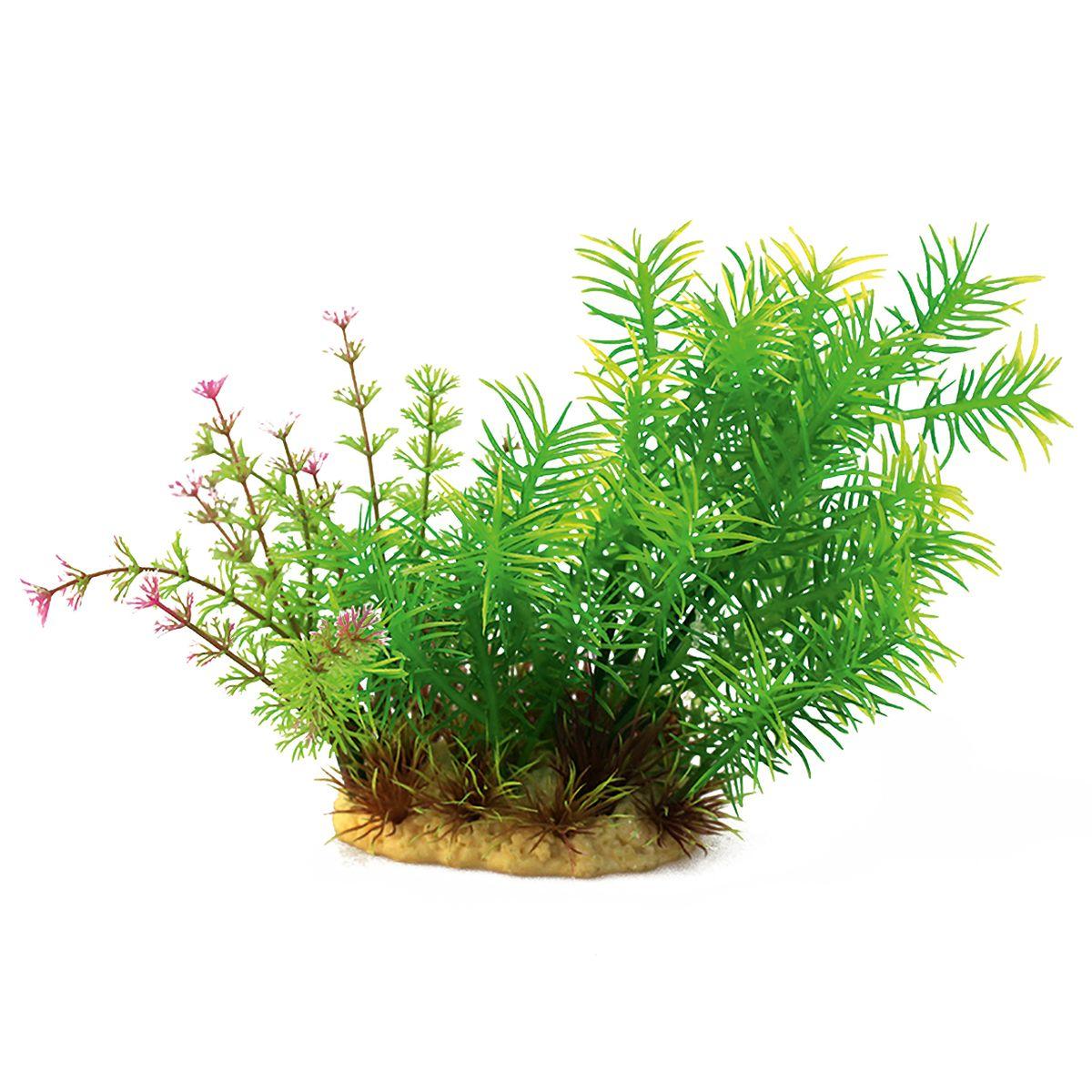 Растение для аквариума ArtUniq Погостемон эректус, высота 15 см12171996Композиция из искусственных растений ArtUniq превосходно украсит и оживит аквариум.Растения - это важная часть любой композиции, они помогут вдохнуть жизнь в ландшафт любого аквариума или террариума. А их сходствос природными порадует даже самых взыскательных ценителей.