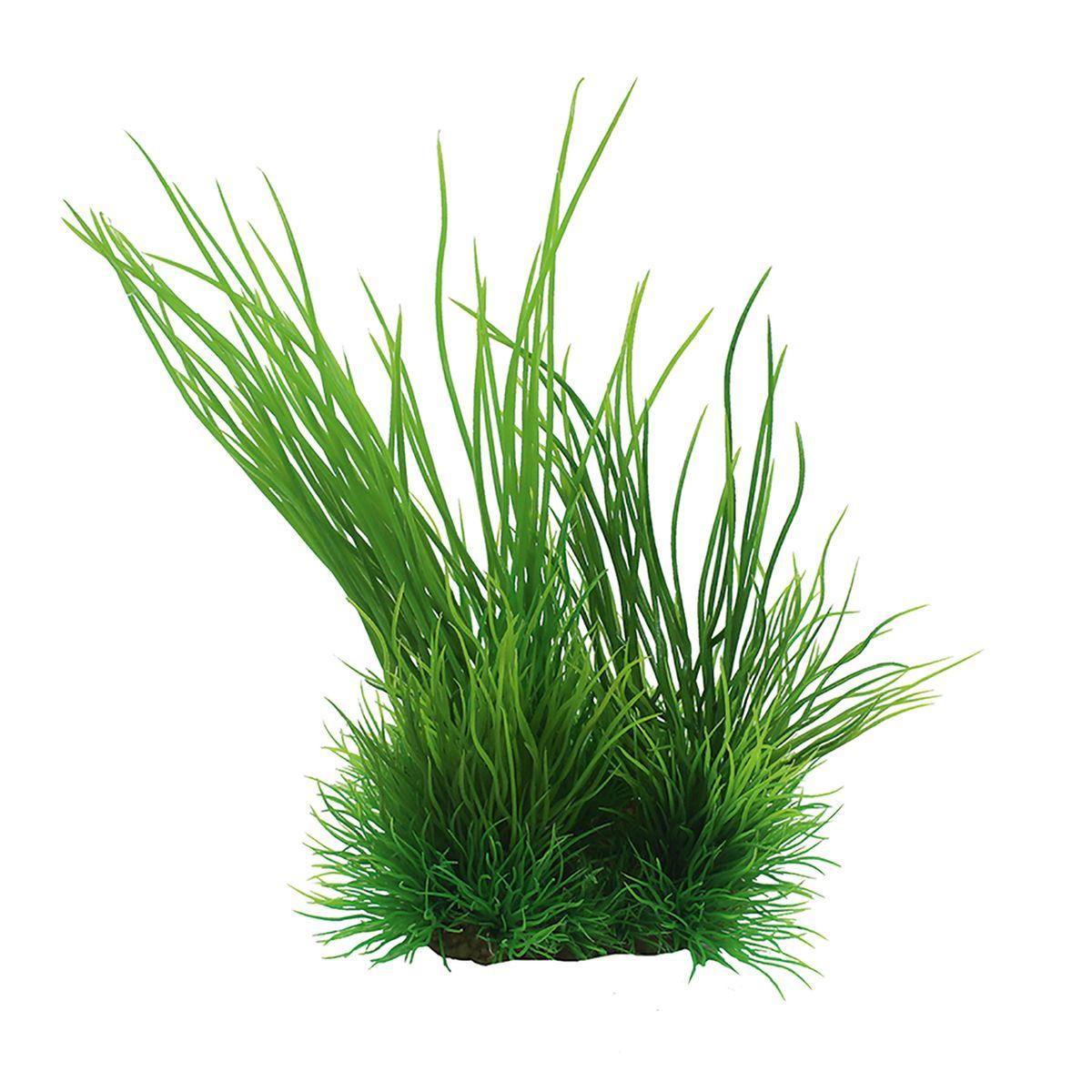 Растение для аквариума ArtUniq Валлиснерия, высота 15 см0120710Композиция из искусственных растений ArtUniq превосходно украсит и оживит аквариум.Растения - это важная часть любой композиции, они помогут вдохнуть жизнь в ландшафт любого аквариума или террариума. А их сходствос природными порадует даже самых взыскательных ценителей.