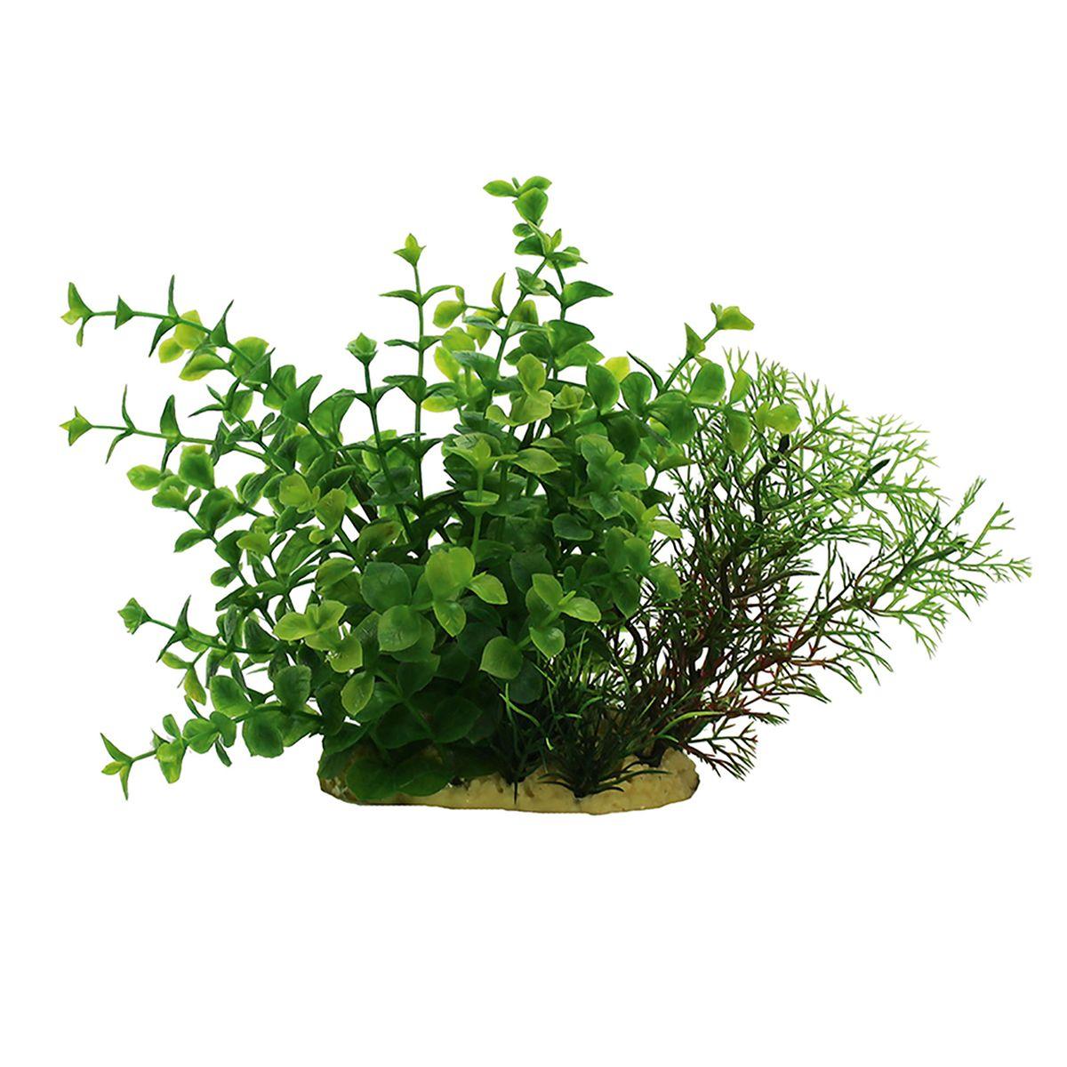 Растение для аквариума ArtUniq Людвигия зеленая, высота 15 см. ART-11401080120710Композиция из искусственных растений ArtUniq превосходно украсит и оживит аквариум.Растения - это важная часть любой композиции, они помогут вдохнуть жизнь в ландшафт любого аквариума или террариума. А их сходствос природными порадует даже самых взыскательных ценителей.