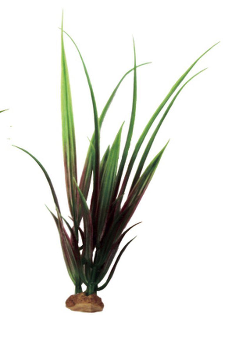 Растение для аквариума ArtUniq Акорус красно-зеленый, 6 x 6 x 19 см0120710Растение для аквариума ArtUniq Акорус красно-зеленый, 6 x 6 x 19 см
