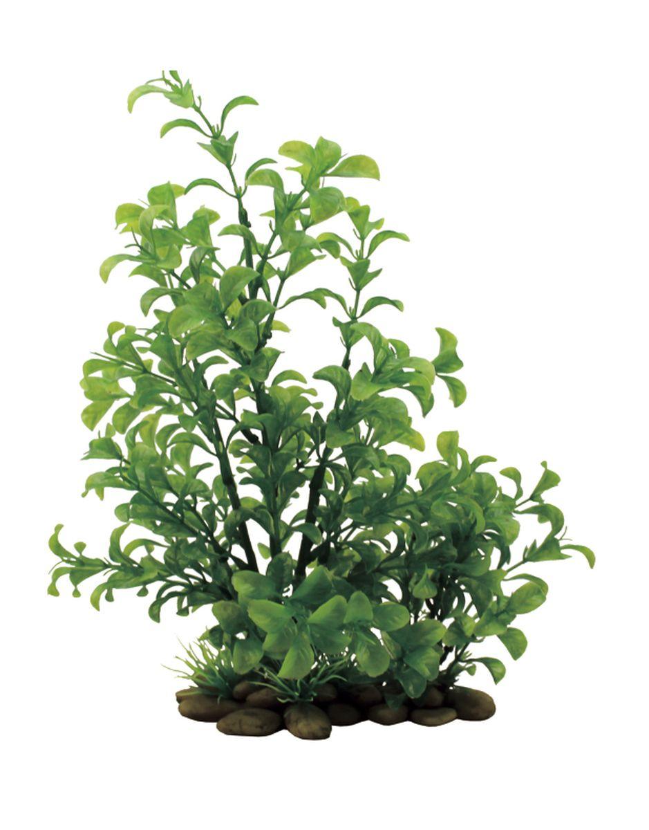Растение для аквариума ArtUniq Людвигия зеленая, высота 38 см0120710Композиция из искусственных растений ArtUniq превосходно украсит и оживит аквариум.Растения - это важная часть любой композиции, они помогут вдохнуть жизнь в ландшафт любого аквариума или террариума. А их сходствос природными порадует даже самых взыскательных ценителей.
