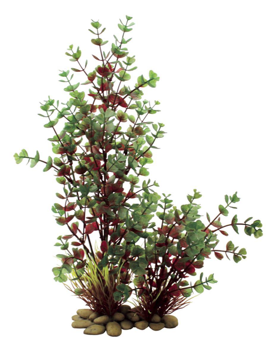 Растение для аквариума ArtUniq Бакопа красно-зеленая, высота 38 смART-1150108Композиция из искусственных растений ArtUniq превосходно украсит и оживит аквариум.Растения - это важная часть любой композиции, они помогут вдохнуть жизнь в ландшафт любого аквариума или террариума. А их сходствос природными порадует даже самых взыскательных ценителей.