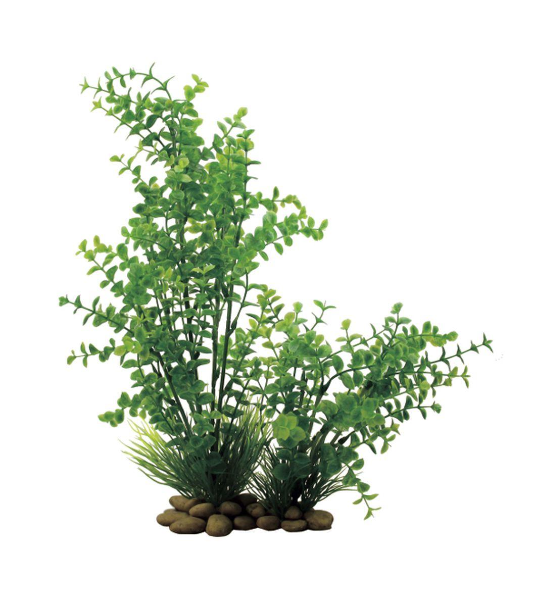 Растение для аквариума ArtUniq Лизимахия, высота 30 см0120710Композиция из искусственных растений ArtUniq превосходно украсит и оживит аквариум.Растения - это важная часть любой композиции, они помогут вдохнуть жизнь в ландшафт любого аквариума или террариума. А их сходствос природными порадует даже самых взыскательных ценителей.