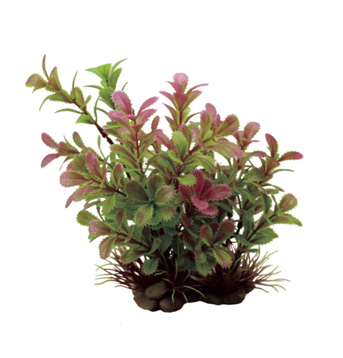 Растение для аквариума ArtUniq Прозерпинака, высота 20 см. ART-11503020120710Композиция из искусственных растений ArtUniq превосходно украсит и оживит аквариум.Растения - это важная часть любой композиции, они помогут вдохнуть жизнь в ландшафт любого аквариума или террариума. А их сходствос природными порадует даже самых взыскательных ценителей.