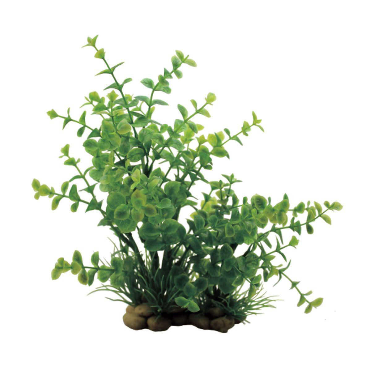 Растение для аквариума ArtUniq Лизимахия, высота 20 см0120710Растение для аквариума ArtUniq Лизимахия, высота 20 см