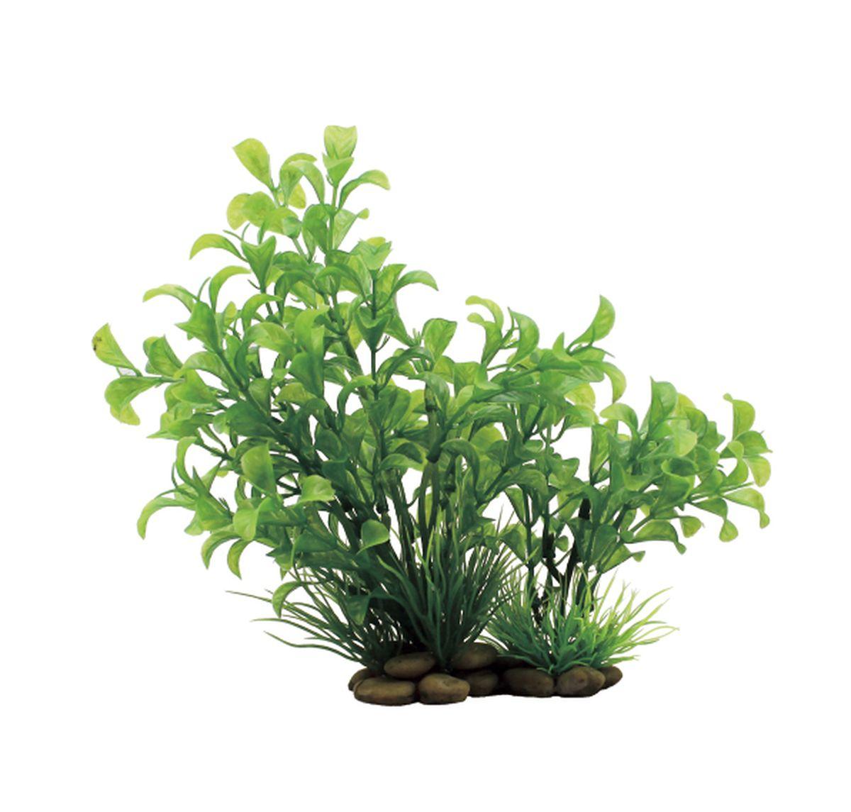 Растение для аквариума ArtUniq Людвигия зеленая, высота 20 смGRAVEL 026/3,5Композиция из искусственных растений ArtUniq превосходно украсит и оживит аквариум.Растения - это важная часть любой композиции, они помогут вдохнуть жизнь в ландшафт любого аквариума или террариума. А их сходствос природными порадует даже самых взыскательных ценителей.