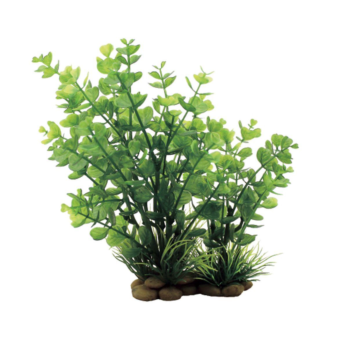 Растение для аквариума ArtUniq Бакопа красно-зеленая, высота 20 см0120710Композиция из искусственных растений ArtUniq превосходно украсит и оживит аквариум.Растения - это важная часть любой композиции, они помогут вдохнуть жизнь в ландшафт любого аквариума или террариума. А их сходствос природными порадует даже самых взыскательных ценителей.