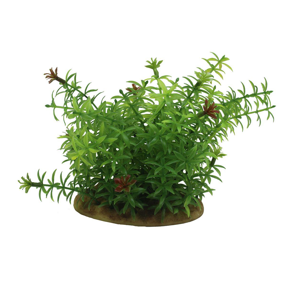 Растение для аквариума ArtUniq Элодея, высота 15 см0120710Композиция из искусственных растений ArtUniq превосходно украсит и оживит аквариум.Растения - это важная часть любой композиции, они помогут вдохнуть жизнь в ландшафт любого аквариума или террариума. А их сходствос природными порадует даже самых взыскательных ценителей.