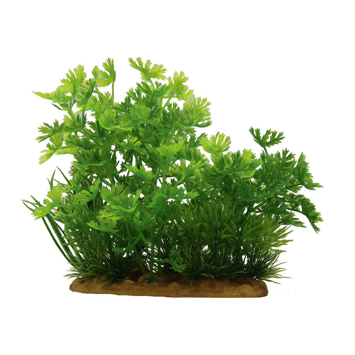 Растение для аквариума ArtUniq Лютик водный, высота 15 см. ART-11601020120710Композиция из искусственных растений ArtUniq превосходно украсит и оживит аквариум.Растения - это важная часть любой композиции, они помогут вдохнуть жизнь в ландшафт любого аквариума или террариума. А их сходствос природными порадует даже самых взыскательных ценителей.