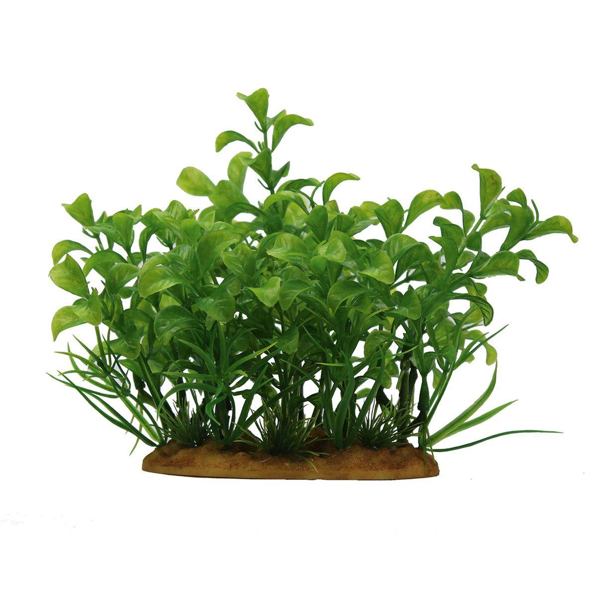 Растение для аквариума ArtUniq Людвигия зеленая, высота 15 см. ART-11601050120710Композиция из искусственных растений ArtUniq превосходно украсит и оживит аквариум.Растения - это важная часть любой композиции, они помогут вдохнуть жизнь в ландшафт любого аквариума или террариума. А их сходствос природными порадует даже самых взыскательных ценителей.
