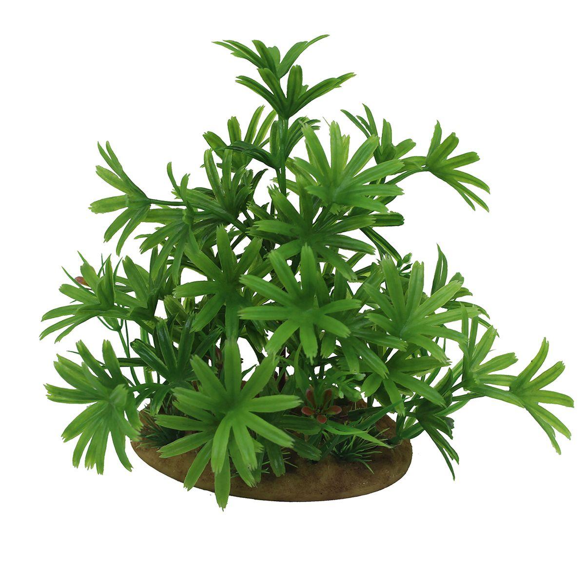 Растение для аквариума ArtUniq Бамбуза зеленая, высота 15 см0120710Композиция из искусственных растений ArtUniq превосходно украсит и оживит аквариум.Растения - это важная часть любой композиции, они помогут вдохнуть жизнь в ландшафт любого аквариума или террариума. А их сходствос природными порадует даже самых взыскательных ценителей.
