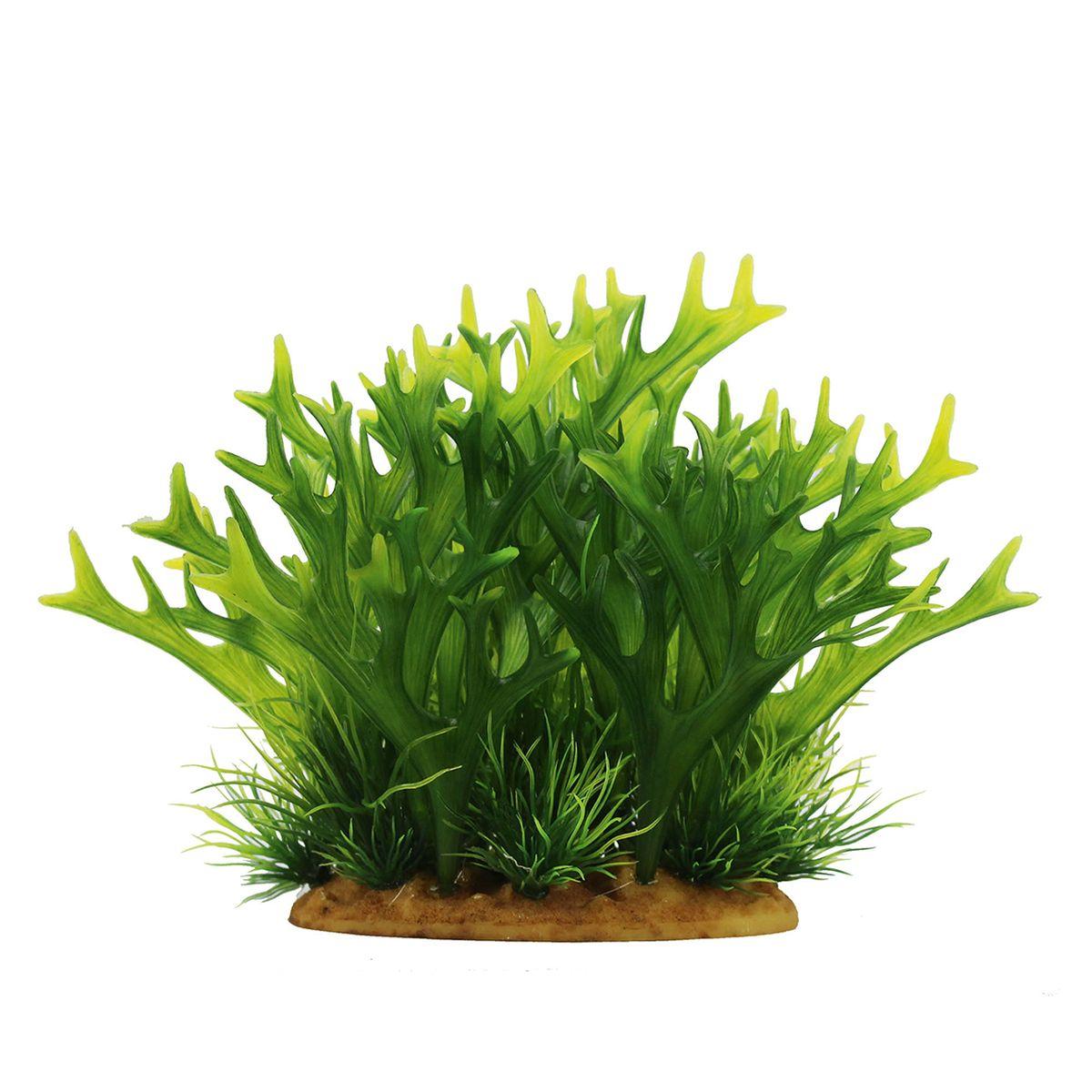 Растение для аквариума ArtUniq Платицериум, высота 15 см0120710Композиция из искусственных растений ArtUniq превосходно украсит и оживит аквариум.Растения - это важная часть любой композиции, они помогут вдохнуть жизнь в ландшафт любого аквариума или террариума. А их сходствос природными порадует даже самых взыскательных ценителей.