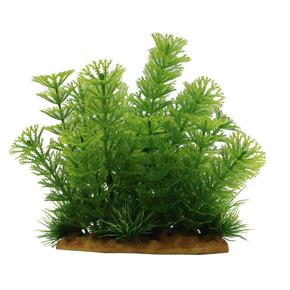 Растение для аквариума ArtUniq Кабомба, высота 15 смART-1160111Композиция из искусственных растений ArtUniq превосходно украсит и оживит аквариум.Растения - это важная часть любой композиции, они помогут вдохнуть жизнь в ландшафт любого аквариума или террариума. А их сходствос природными порадует даже самых взыскательных ценителей.