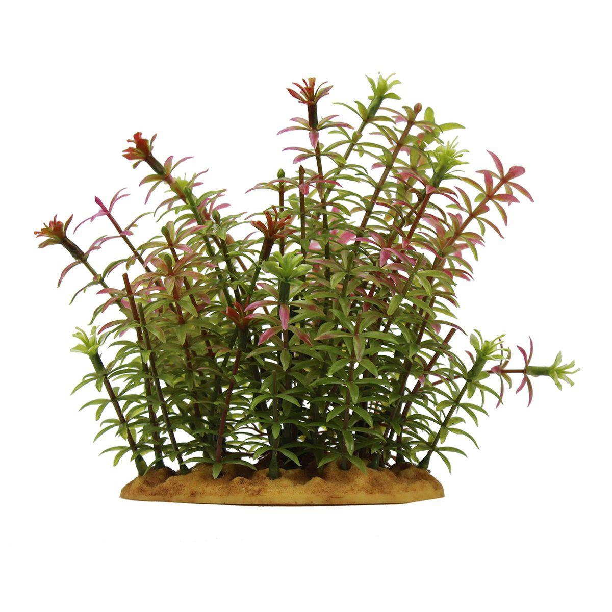 Растение для аквариума ArtUniq Ротала индийская, высота 15 см101246Композиция из искусственных растений ArtUniq превосходно украсит и оживит аквариум.Растения - это важная часть любой композиции, они помогут вдохнуть жизнь в ландшафт любого аквариума или террариума. А их сходствос природными порадует даже самых взыскательных ценителей.