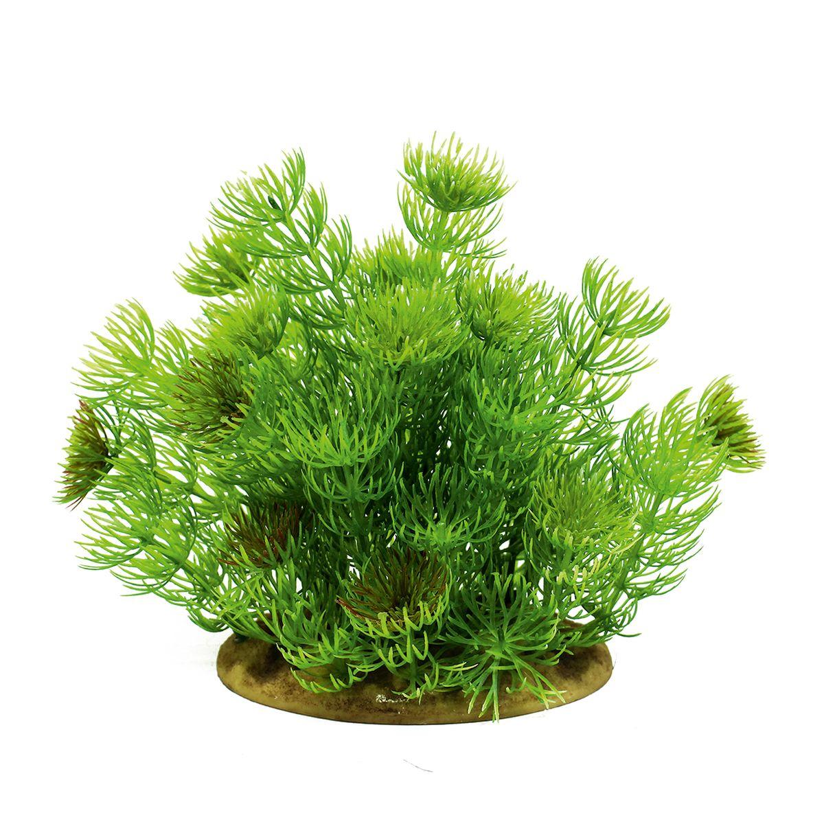 Растение для аквариума ArtUniq Лимнофила, высота 15 см. ART-11601130120710Композиция из искусственных растений ArtUniq превосходно украсит и оживит аквариум.Растения - это важная часть любой композиции, они помогут вдохнуть жизнь в ландшафт любого аквариума или террариума. А их сходствос природными порадует даже самых взыскательных ценителей.