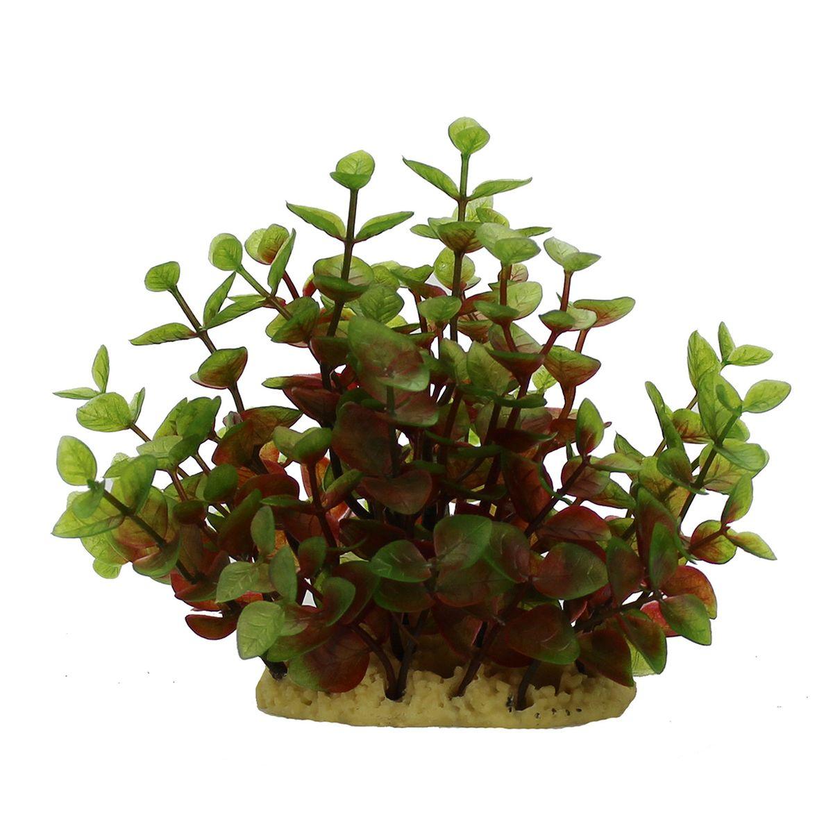 Растение для аквариума ArtUniq Людвигия красно-зеленая, высота 15 см12171996Композиция из искусственных растений ArtUniq превосходно украсит и оживит аквариум.Растения - это важная часть любой композиции, они помогут вдохнуть жизнь в ландшафт любого аквариума или террариума. А их сходствос природными порадует даже самых взыскательных ценителей.