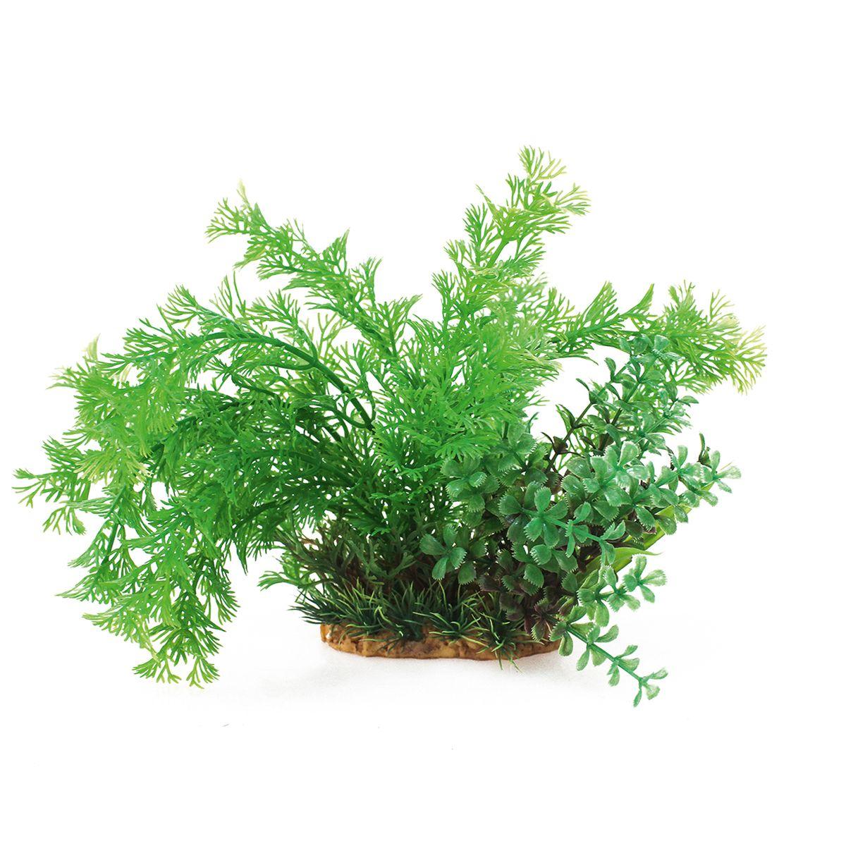 Растение для аквариума ArtUniq Кабомба, высота 20 см. ART-11602070120710Композиция из искусственных растений ArtUniq превосходно украсит и оживит аквариум.Растения - это важная часть любой композиции, они помогут вдохнуть жизнь в ландшафт любого аквариума или террариума. А их сходствос природными порадует даже самых взыскательных ценителей.