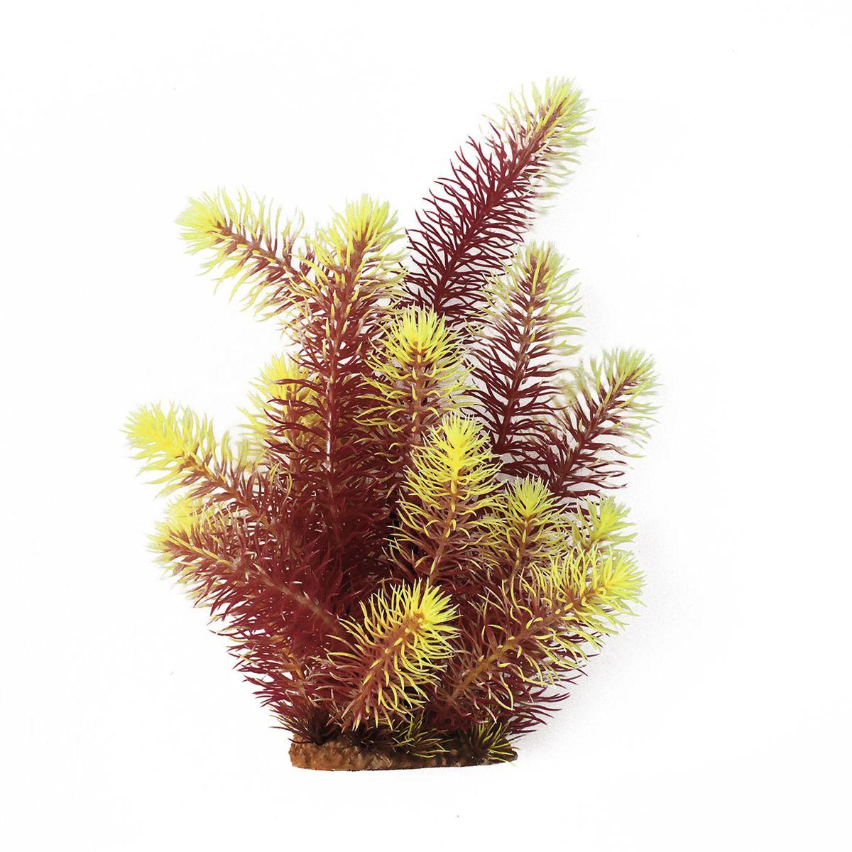 Растение для аквариума ArtUniq Погостемон эректус красно-желтый, высота 30 см12171996Композиция из искусственных растений ArtUniq превосходно украсит и оживит аквариум.Растения - это важная часть любой композиции, они помогут вдохнуть жизнь в ландшафт любого аквариума или террариума. А их сходствос природными порадует даже самых взыскательных ценителей.