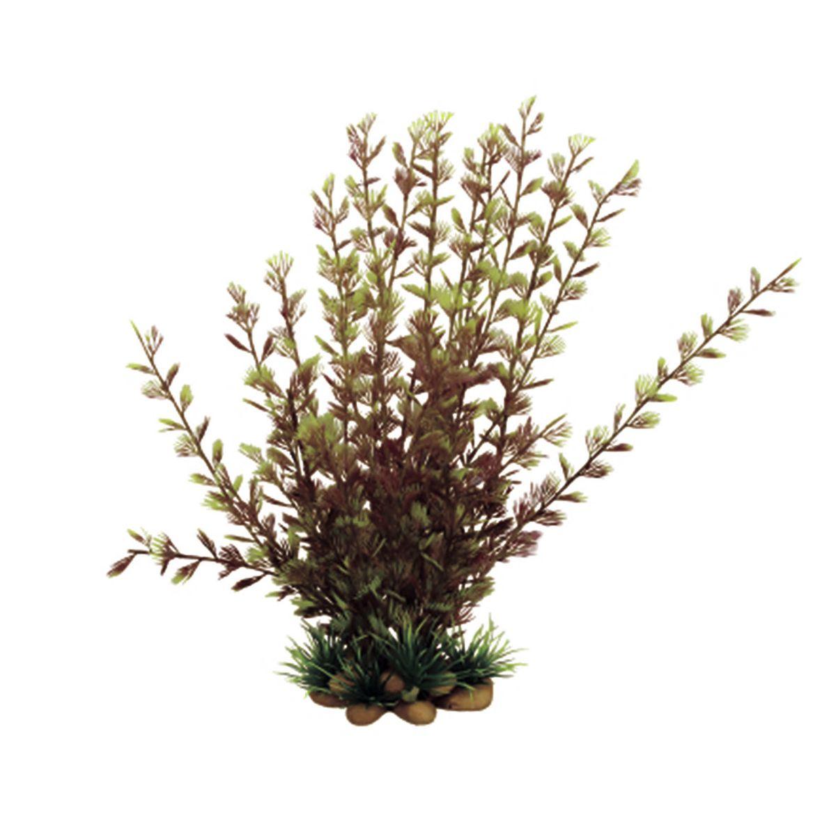 Растение для аквариума ArtUniq Кабомба вильчатая красная, высота 20 см. ART-11605200120710Композиция из искусственных растений ArtUniq превосходно украсит и оживит аквариум.Растения - это важная часть любой композиции, они помогут вдохнуть жизнь в ландшафт любого аквариума или террариума. Лучше всего это сделают яркие и сочные цвета искусственных растений серии ArtPlants. А их сходствос природными порадует даже самых взыскательных ценителей.