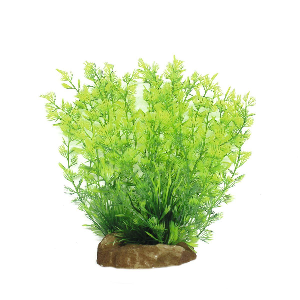 Растение для аквариума ArtUniq Кабомба, высота 20 см0120710Композиция из искусственных растений ArtUniq превосходно украсит и оживит аквариум.Растения - это важная часть любой композиции, они помогут вдохнуть жизнь в ландшафт любого аквариума или террариума. Лучше всего это сделают яркие и сочные цвета искусственных растений серии ArtPlants. А их сходствос природными порадует даже самых взыскательных ценителей.