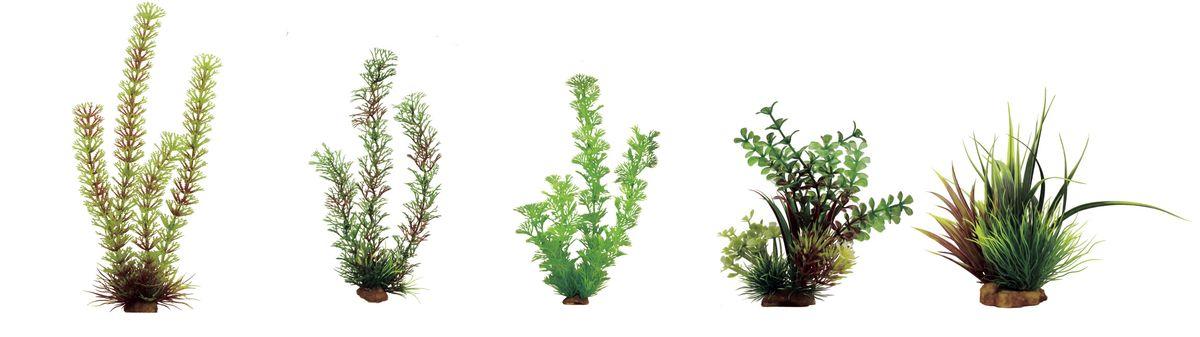 Набор растений для аквариума ArtUniq Амбулия, перистолистник, кабомба, микрантемум, акорус, высота 15-35 см, 5 шт0120710Композиция из искусственных растений ArtUniq превосходно украсит и оживит аквариум.Растения - это важная часть любой композиции, они помогут вдохнуть жизнь в ландшафт любого аквариума или террариума. А их сходствос природными порадует даже самых взыскательных ценителей.