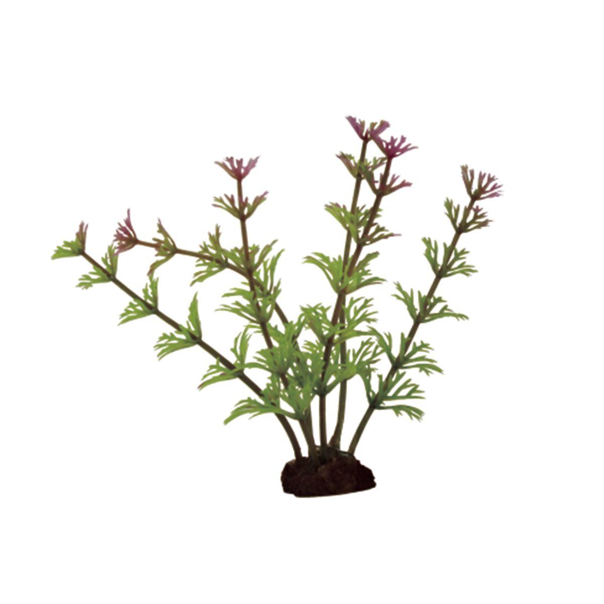 Растение для аквариума ArtUniq Кабомба красно-зеленая, высота 10 см, 6 шт0120710Композиция из искусственных растений ArtUniq превосходно украсит и оживит аквариум.Растения - это важная часть любой композиции, они помогут вдохнуть жизнь в ландшафт любого аквариума или террариума. А их сходствос природными порадует даже самых взыскательных ценителей.