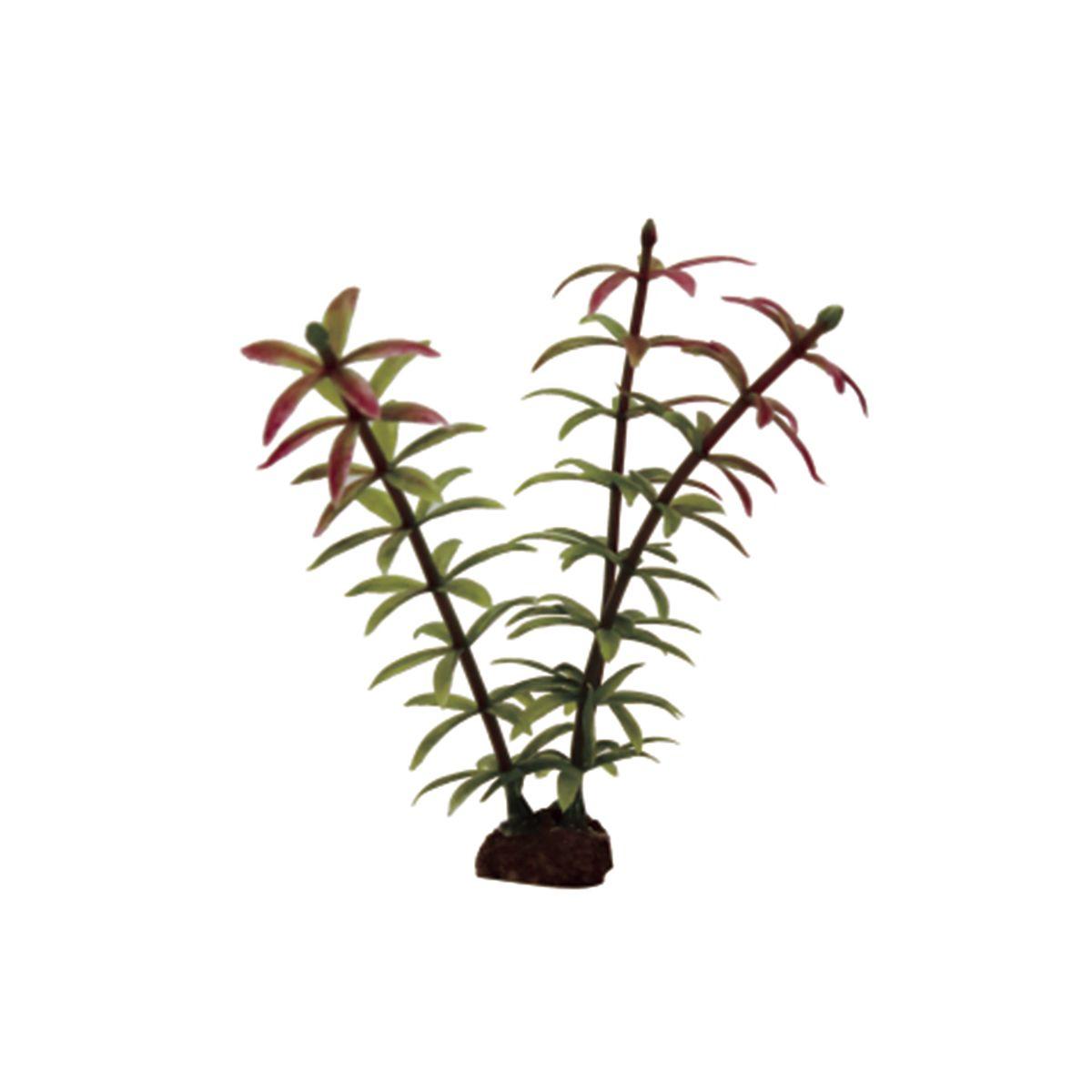 Растение для аквариума ArtUniq Элодея красно-зеленая, высота 10 см, 6 шт0120710Композиция из искусственных растений ArtUniq превосходно украсит и оживит аквариум.Растения - это важная часть любой композиции, они помогут вдохнуть жизнь в ландшафт любого аквариума или террариума. А их сходствос природными порадует даже самых взыскательных ценителей.