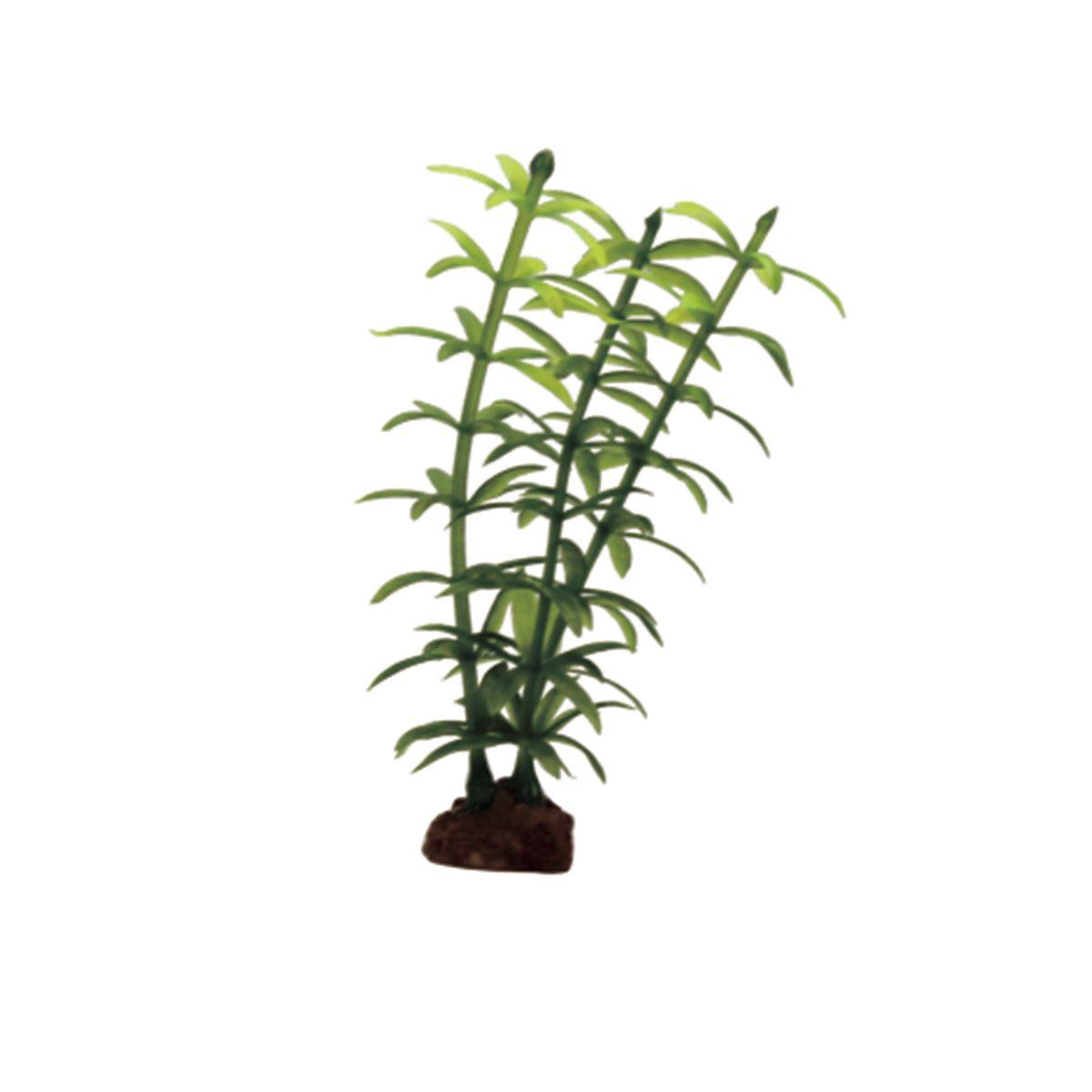 Растение для аквариума ArtUniq Элодея, высота 10 см, 6 шт0120710Композиция из искусственных растений ArtUniq превосходно украсит и оживит аквариум.Растения - это важная часть любой композиции, они помогут вдохнуть жизнь в ландшафт любого аквариума или террариума. А их сходствос природными порадует даже самых взыскательных ценителей.