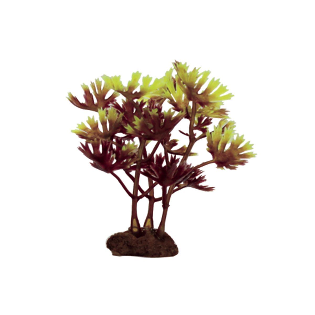 Растение для аквариума ArtUniq Лютик водный красно-зеленый, высота 10 см, 6 шт0120710Композиция из искусственных растений ArtUniq превосходно украсит и оживит аквариум.Растения - это важная часть любой композиции, они помогут вдохнуть жизнь в ландшафт любого аквариума или террариума. А их сходствос природными порадует даже самых взыскательных ценителей.