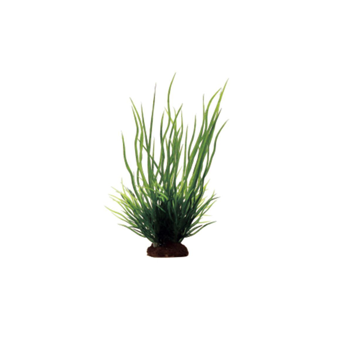 Растение для аквариума ArtUniq Ситняг, высота 10 см, 6 шт растение для аквариума artuniq кариота высота 60 см