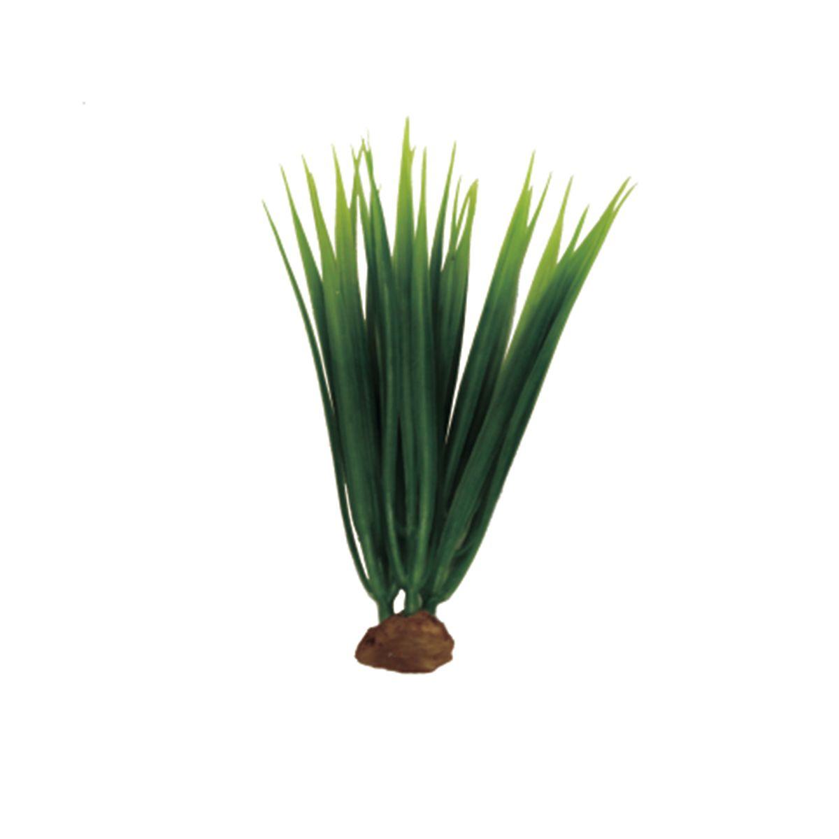Растение для аквариума ArtUniq Акорус, высота 15 см, 5 шт0120710Композиция из искусственных растений ArtUniq превосходно украсит и оживит аквариум.Растения - это важная часть любой композиции, они помогут вдохнуть жизнь в ландшафт любого аквариума или террариума. А их сходствос природными порадует даже самых взыскательных ценителей.