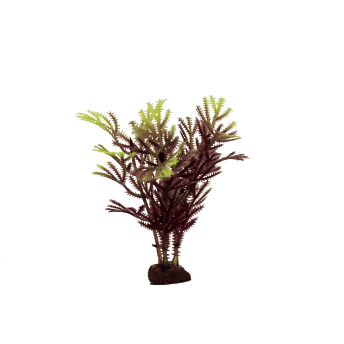 Растение для аквариума ArtUniq Хоттиния коричнево-желтая, высота 10 см, 6 шт0120710Композиция из искусственных растений ArtUniq превосходно украсит и оживит аквариум.Растения - это важная часть любой композиции, они помогут вдохнуть жизнь в ландшафт любого аквариума или террариума. А их сходствос природными порадует даже самых взыскательных ценителей.