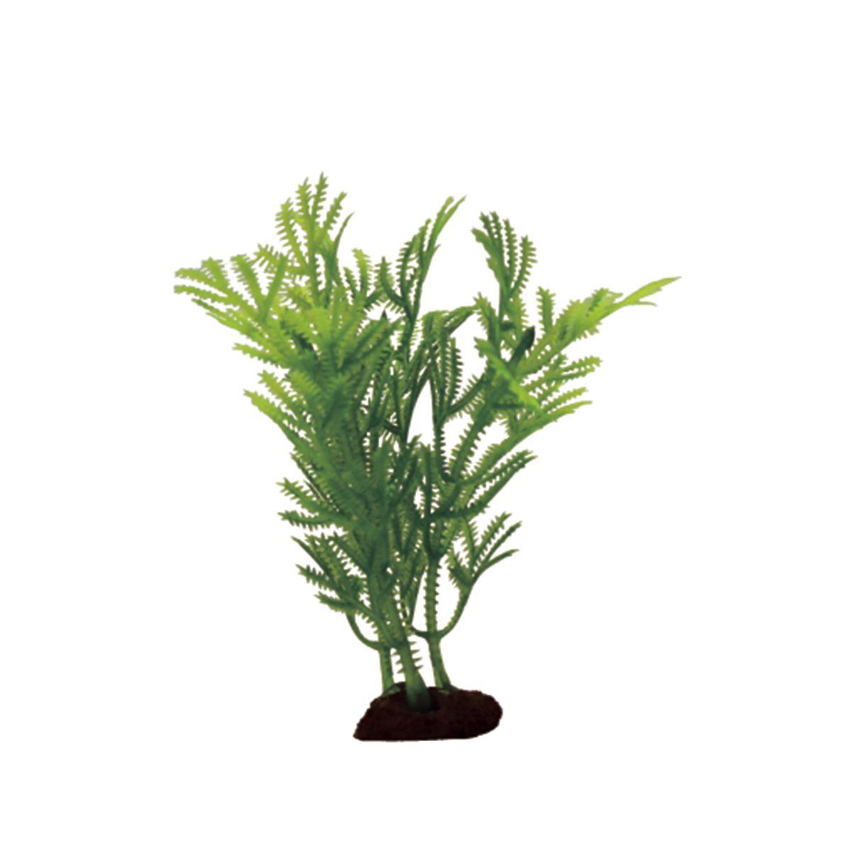 Растение для аквариума ArtUniq Хоттиния , высота 10 см, 6 шт0120710Композиция из искусственных растений ArtUniq превосходно украсит и оживит аквариум.Растения - это важная часть любой композиции, они помогут вдохнуть жизнь в ландшафт любого аквариума или террариума. А их сходствос природными порадует даже самых взыскательных ценителей.