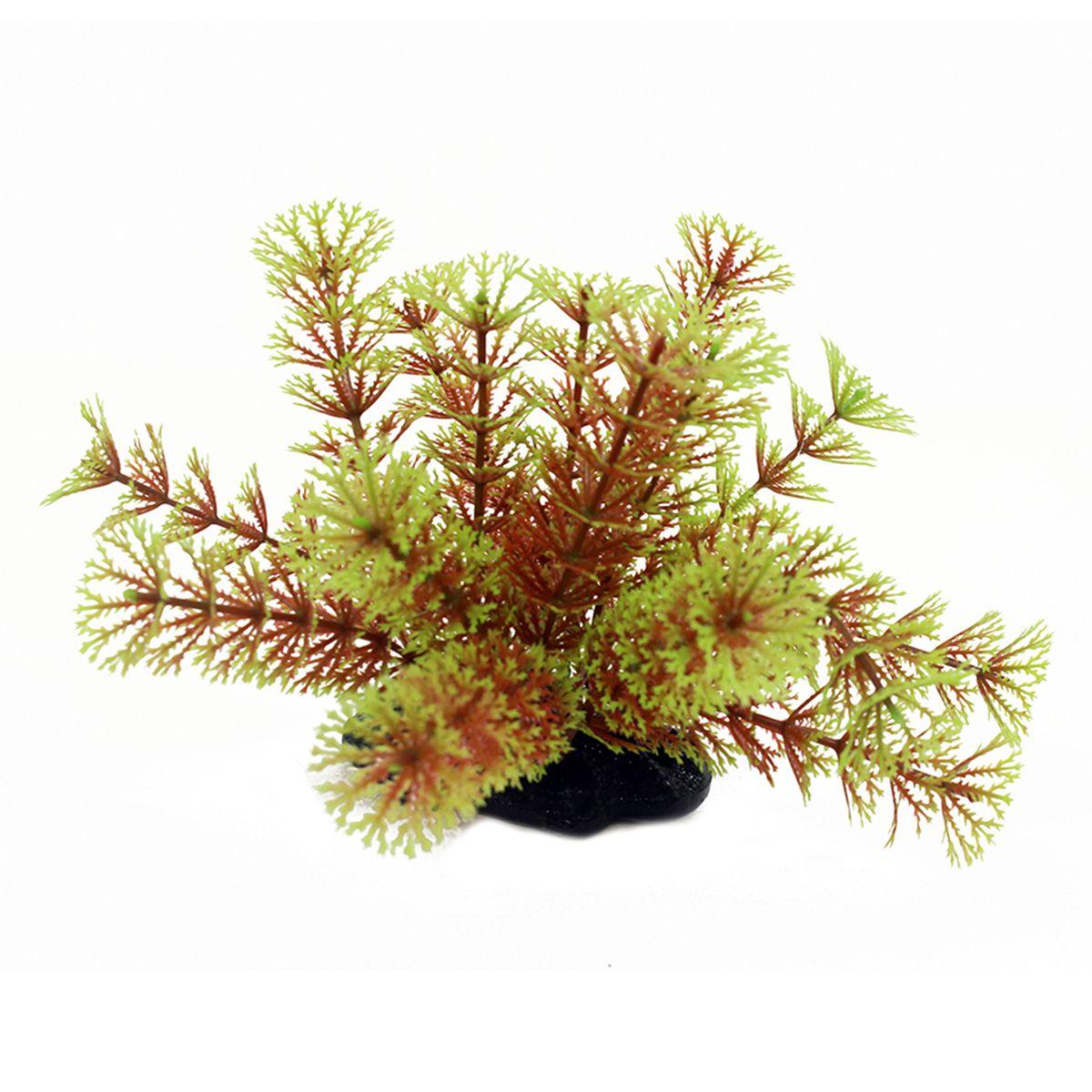Растение для аквариума ArtUniq Кабомба красно-зеленая, высота 10-12 см0120710Композиция из искусственных растений ArtUniq превосходно украсит и оживит аквариум.Растения - это важная часть любой композиции, они помогут вдохнуть жизнь в ландшафт любого аквариума или террариума. А их сходствос природными порадует даже самых взыскательных ценителей.